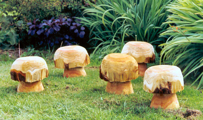 The toadstool wood
